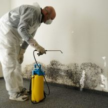 Mold Removal in Calgary: Standard Operating Procedure Executed By Most Experts
